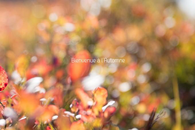 Séance photo en automne en Alsace