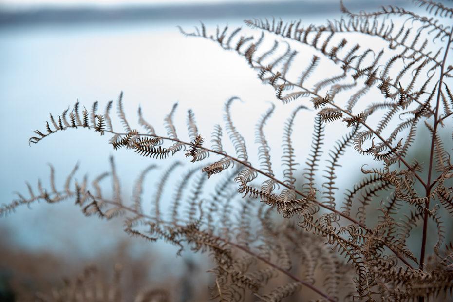 photographe-en-finistere-nature-automne